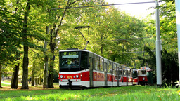 trams wait in depot (station) - park (forest - trees) - people walking - sunny Footage