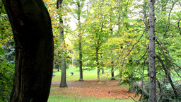 Autumn park (forest - trees) - fallen leaves - grass - people in background Footage