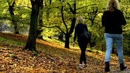 People walking - path - Autumn park (forest - trees) - Fallen leaves - sunny Footage