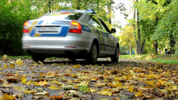 Police car - Fallen leaves on road - Autumn park (forest - trees) - people in ba Footage