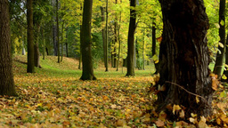 Autumn park (forest - trees) - fallen leaves Footage