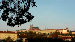 city (buildings) - Prague castle (Hradcany) with branch tree - morning - blue sk Footage