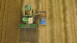 Top view combine harvester gathers the wheat at sunset. Harvesting grain field Footage
