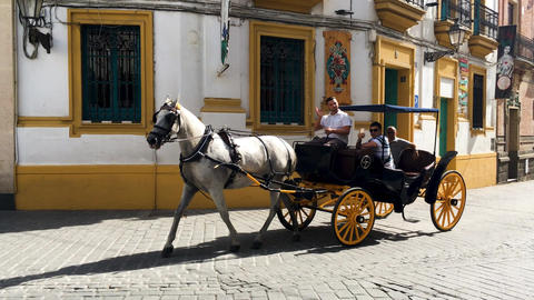 Typical Andalusian horses with carriages ビデオ