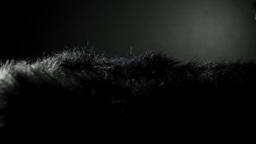 Black fur background HD stock footage Footage