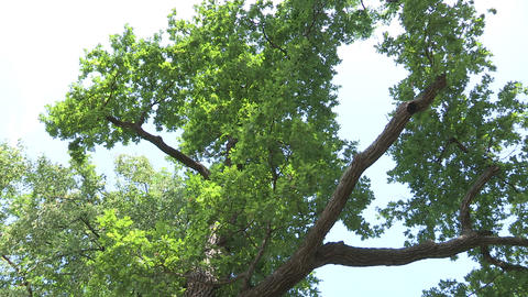 Tree Footage