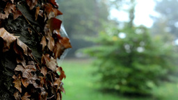 detail of a tree trunk with dry leaves - forest (trees) - morning mist Footage