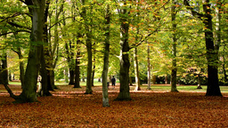 Autumn park (trees) - fallen leaves - people walking in background - sunny Footage