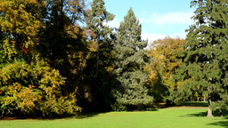 panorama autumn park (forest-trees) - sun rays (sunny) - grass (lawn) Footage