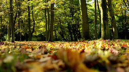 Autumn park (forest-trees) - fallen leaves - sun rays (sunny) Footage