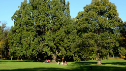 Autumn park(trees - forest) - people relax - sunny - blue sky Footage