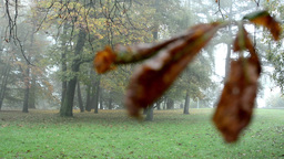 Autumn park (forest - trees) - fallen leaves - tree branch - mist Footage