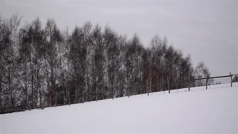 Big trees of the forest covered by snow 4d Footage
