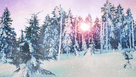 Falling snow in a winter forest with snow covered trees. Cold red sun between Footage
