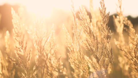 Grass in the sunset light Footage