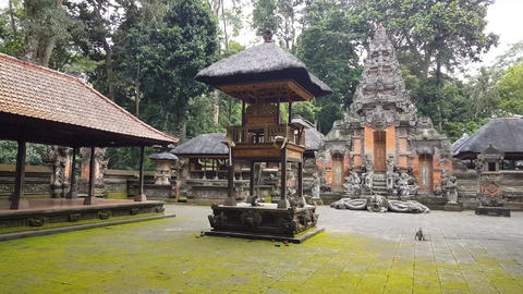 Wild monkeys in front of temple in Monkeyforest, Ubud, Bali Footage