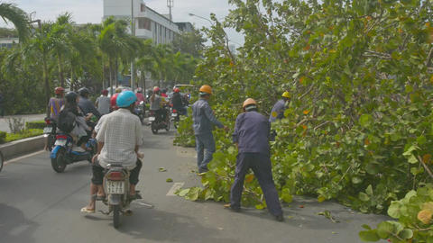 People Drive Scooters and Workers Remove Branches from Road Footage