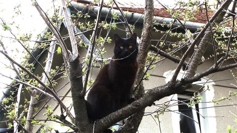 Black Cat Sitting In A Tree Looking At The World Around Them 4 stock footage