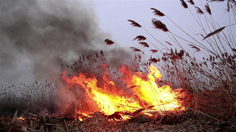 Fields of dry reeds on fire put a person who wants to clean up the place 1 Live Action