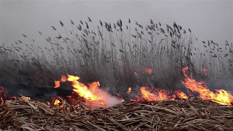 Fields of dry reeds on fire put a person who wants to clean up the place 6 Live Action