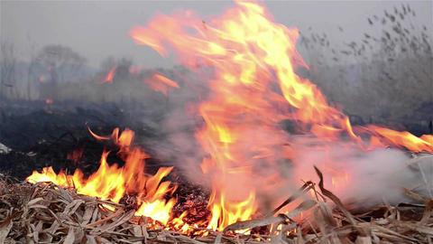 Fields of dry reeds on fire put a person who wants to clean up the place 7 Footage
