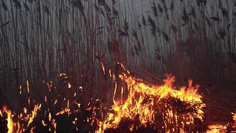 Fields of dry reeds on fire put a person who wants to clean up the place 10 Live Action