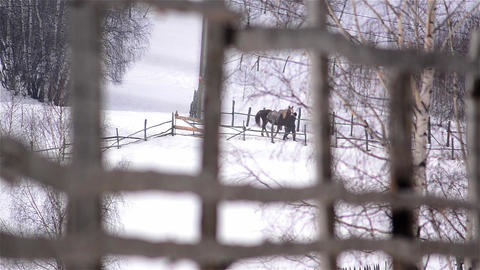 Man leading a horse holding it by the bridle is seen through an wooden fence 3 Footage