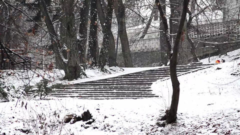People and dogs walking in the alleys of a park covered with snow 3 Footage
