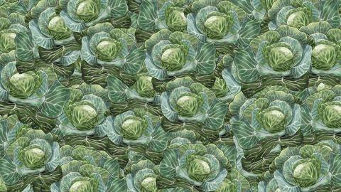 Cabbage CG動画素材