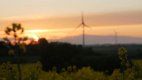 Rape field - sunset with wind turbine Footage
