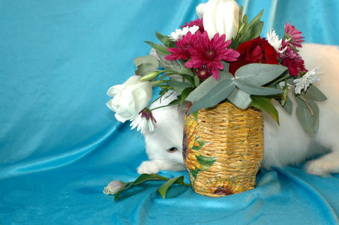 A beautiful fluffy white cat hides behind a vase of flowers. Pet Foto