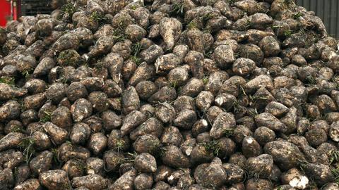 Combine harvesting sugar beets Footage