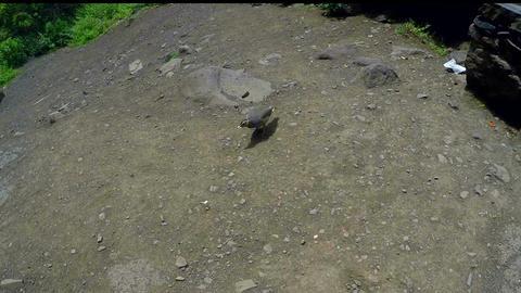 Little bird pecking crumbs Footage