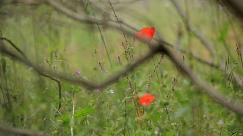 Gentle wildflowers, wildlife. Field with wildflowers and green grass GIF