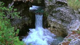 The stream into the wood ビデオ