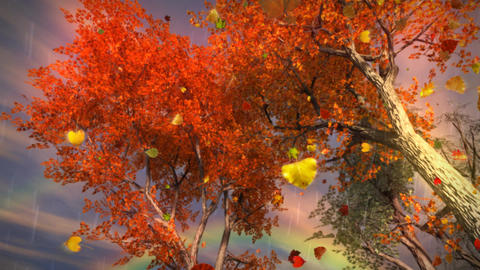 1035 Autumn Leaves Falling with Rainbow and Rain Stock Video Footage