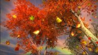1035 Autumn Leaves Falling With Rainbow And Rain stock footage