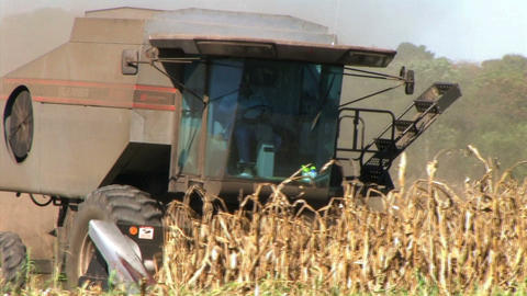 Combine Harvesting Corn Live Action
