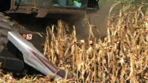 Combine Harvesting Corn Stock Video Footage