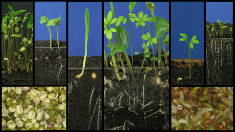 Montage of growing vegetables time-lapse 1 Footage