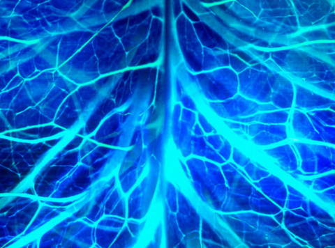 Nerve System Blue : VJ Loop 013 Stock Video Footage