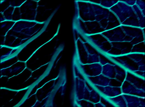 Vibrating Organic Background : VJ Loop 369 Animation
