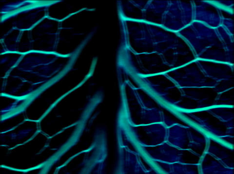 Vibrating Organic Background : VJ Loop 369 Stock Video Footage