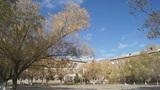 Autumn campus view Footage