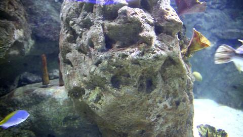 Underwater coral life Footage