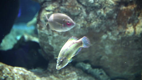 Underwater coral life Stock Video Footage