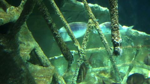 Sunken Ship at deep underwater Stock Video Footage