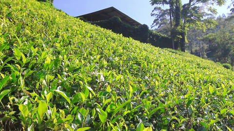 Sri Lanka tea garden mountains Stock Video Footage