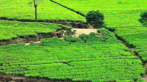 Sri Lanka tea garden mountains Stock Video Footage
