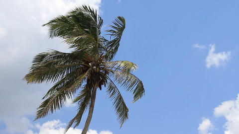 palm tree on blue sky Stock Video Footage